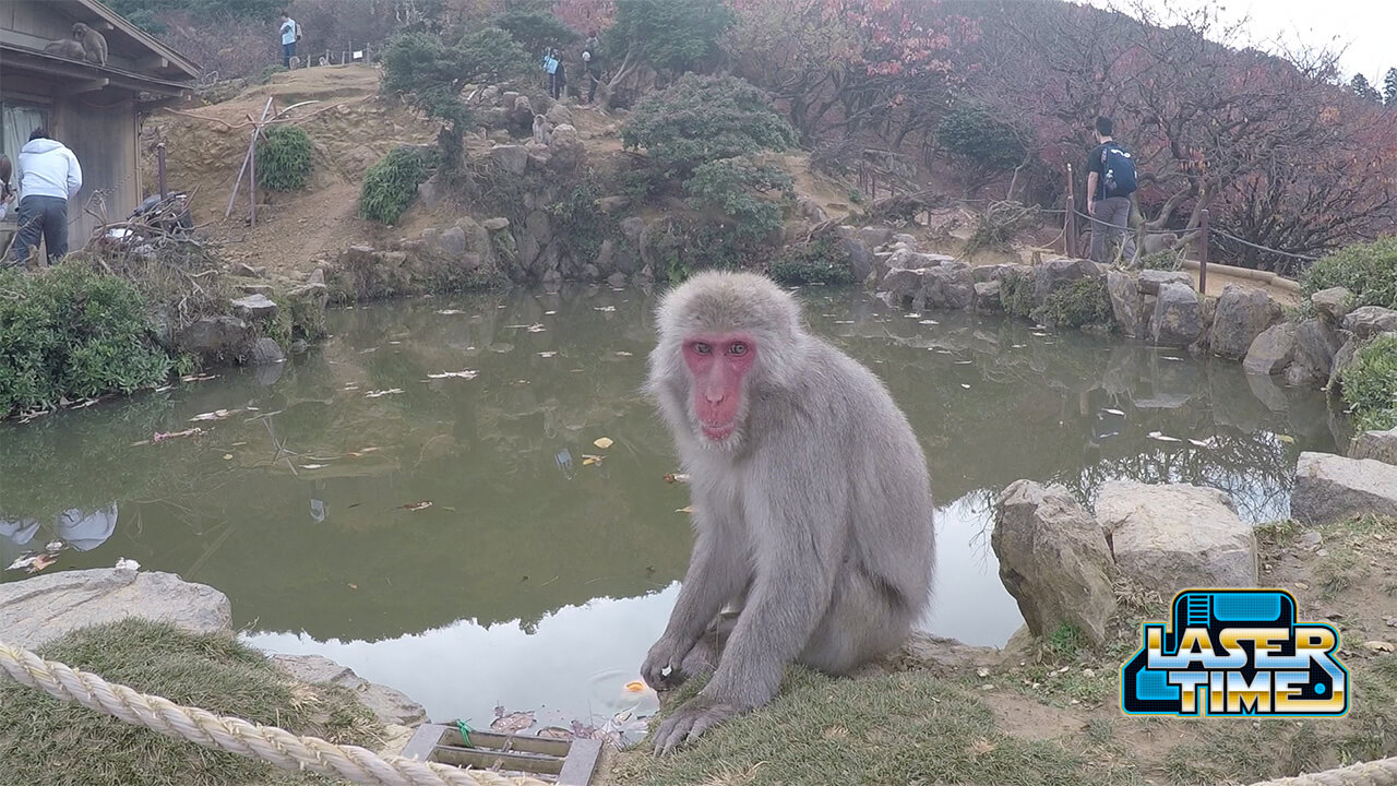 arishiyama-monkey-park-laser-japan-time-kyoto